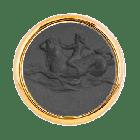 T1 Cupido Marino Nero